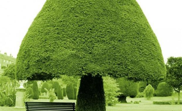 Mushroom-shaped tree