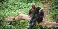 Man Comforts Gorilla