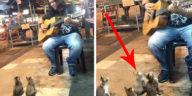 Surprising Animal Audience of Street Musicians