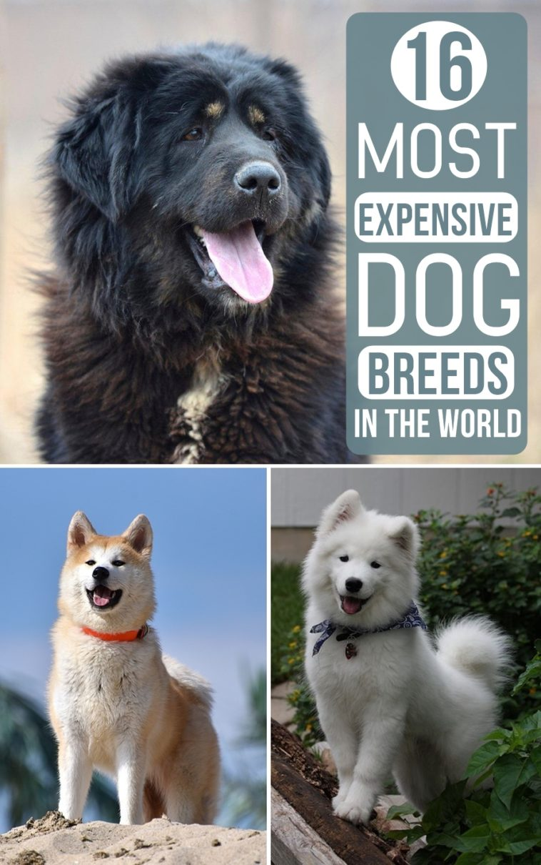 THE MOST EXPENSIVE DOG EVER - Luxury Topics luxury portal ...  |Worlds Most Expensive Cane