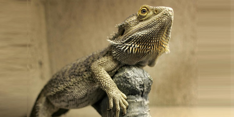 18 Exotic Low Maintenance Cool Pets That Are Legal To Own